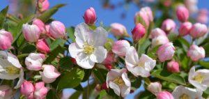 Healing Hilde bloesemremedie